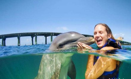 Dolphin Explorer – Punta Cana, Dominican Republic