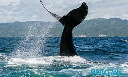 Whale Watching in Samana – One of the Best DayTrips from Punta Cana – A Magical Experience