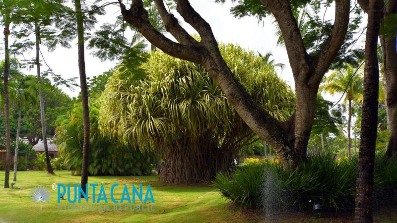 Garden - Casa de Campo - La Romana, Dominican Republic