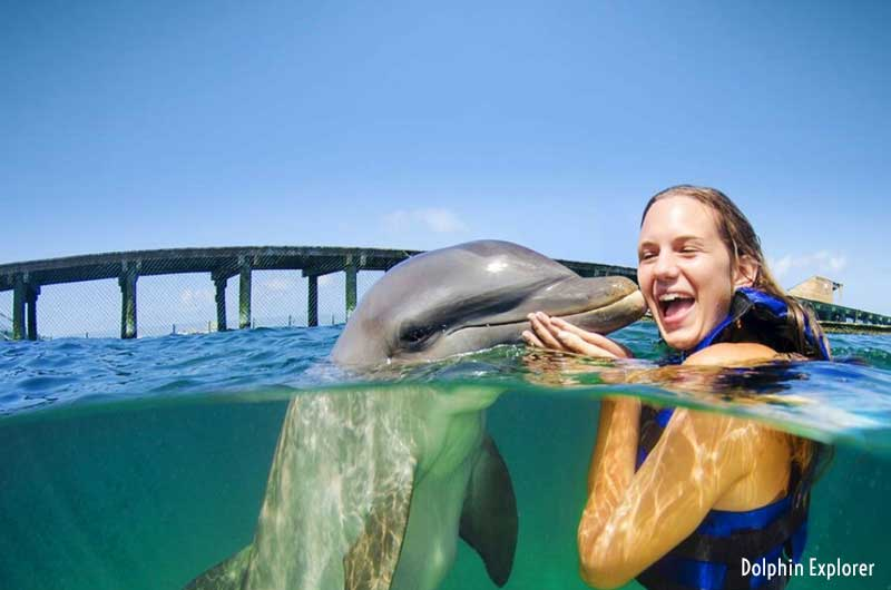Dolphin Explorer Tours - Punta Cana, Dominican Republic