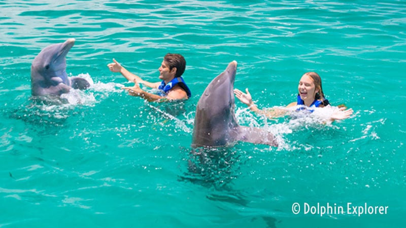 Dolphin Explorer - Attractions in Punta Cana, Dominican Republic