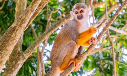 Monkeyland – Adventure / Nature Park<BR>Punta Cana, Dominican Republic