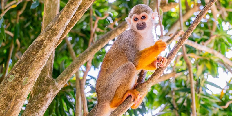 Monkeyland - Punta Cana, Dominican Republic