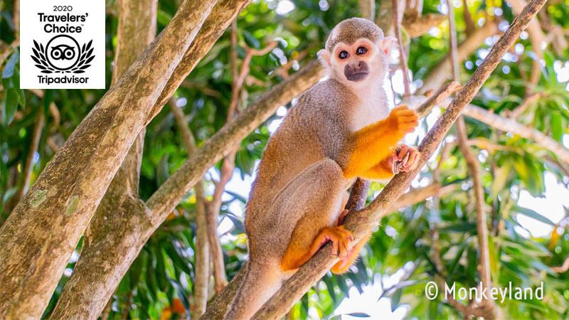 Monkeyland by Runners Adventure - Punta Cana, Dominican Republic
