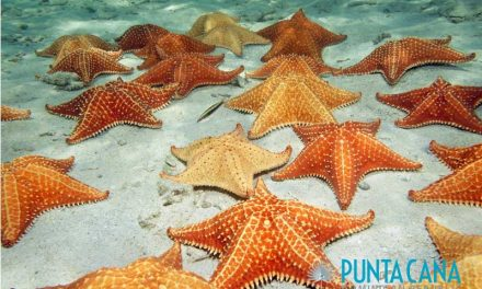 Best Snorkeling In Punta Cana, Dominican Republic