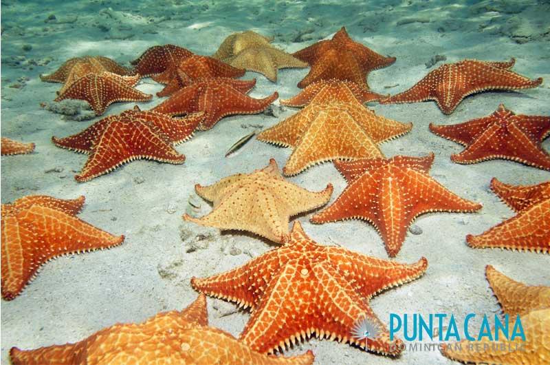 Starfish - Punta Cana Snorkeling Tours - Punta Cana, Dominican Republic